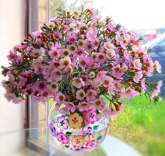 Hoa thanh liễu là hoa gì?Cách cắm và chăm hoa thanh liễu được tươi lâu