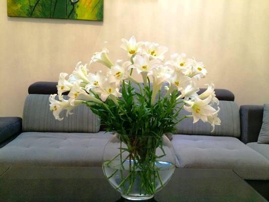 Hoa bách hợp là hoa gì? Hoa bách hợp có phải hoa ly, hoa loa kèn không?