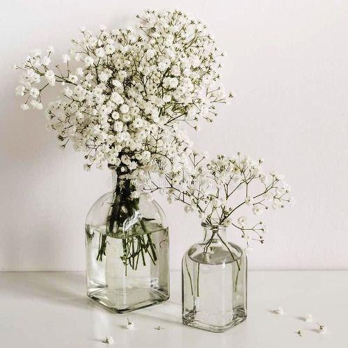 Hoa baby là gì? nguồn gốc, ý nghĩa và cách làm hoa baby khô