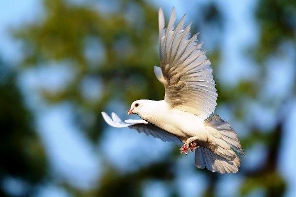 Chim trắng bay vào nhàlà điềm gì?