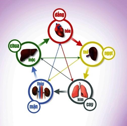 """Lục phủ ngũ tạng là gì? Thế nào là """"lục phủ ngũ tạng"""" khỏe mạnh?"""