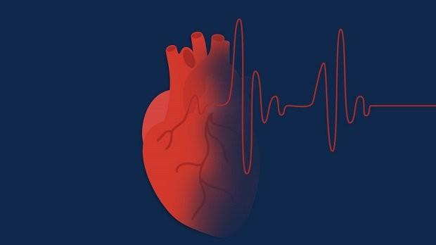 10 sự thật thú vị về trái tim có thể bạn chưa biết?