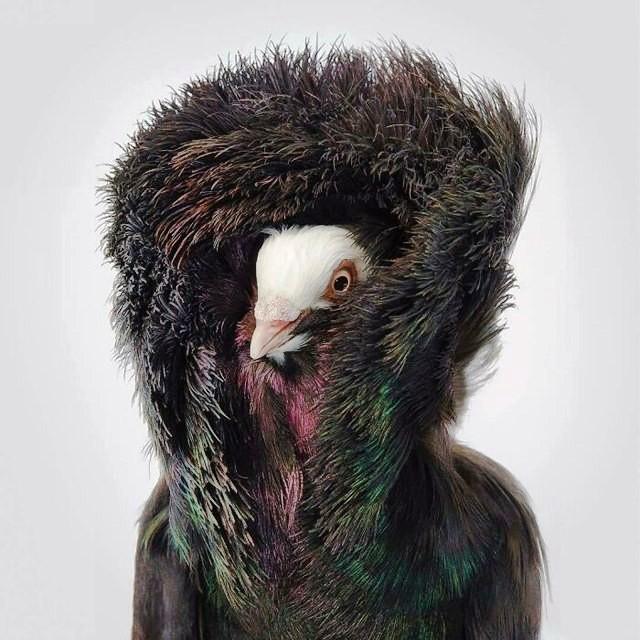 Top 25 loài chim quý hiếm và tuyệt đẹp nhất thế giới
