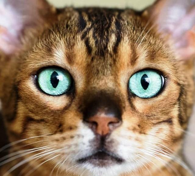 Top những đôi mắt đẹp nhất trong vương quốc thế giới động vật