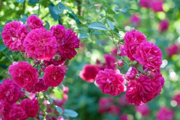 Xem ngay 12 cung hoàng đạo là hiện thân của loài hoa nào