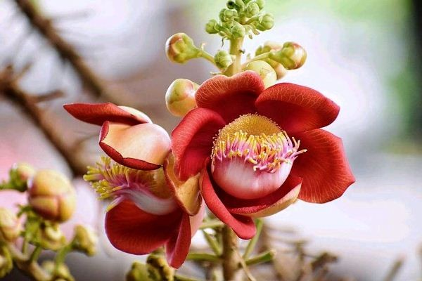 Hoa vô ưu là gì? nguồn gốc, ý nghĩa và cách chăm sóc hoa vô ưu
