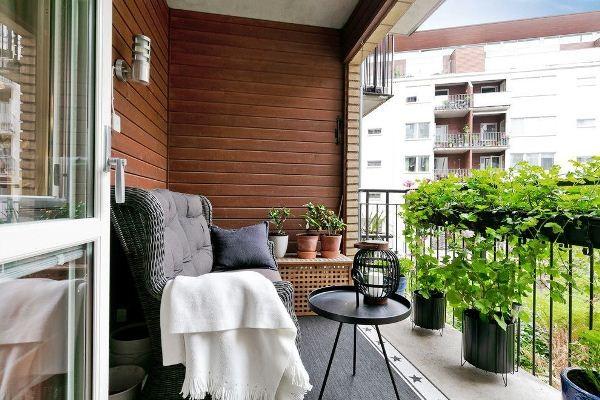 24 loại cây trồng ở ban công chịu nắng tốt, giúp lọc không khí trong nhà