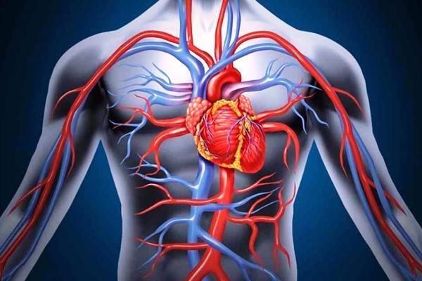 Tổng hợp các dạng bệnh lý về mạch máu đầy đủ nhất