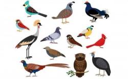 Loài chim có răng không - Tại sao chim không có răng?