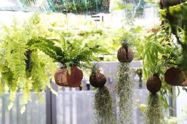 Mách bạn chọn loại cây phù hợp với tính cách 12 cung hoàng đạo chuẩn nhất
