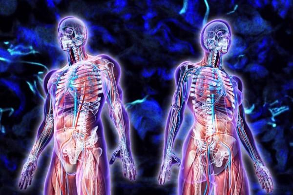 Cấu tạo cơ thể con người và những con số khổng lồ khiến bạn phải giật mình