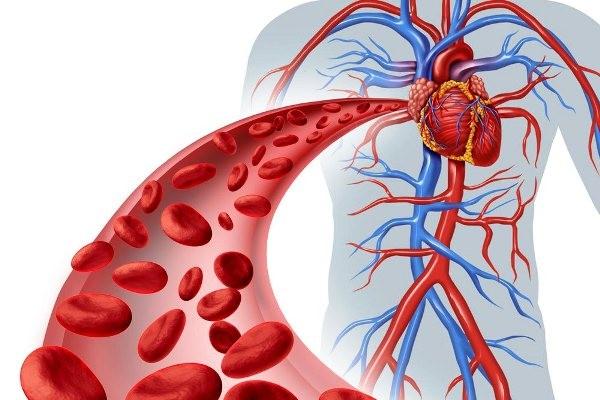 6 thói quen hàng ngày đang âm thầm hủy hoại mạch máu của bạn