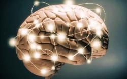 Bạn có biết - Não bộ cũng cần chăm sóc và tập thể dục