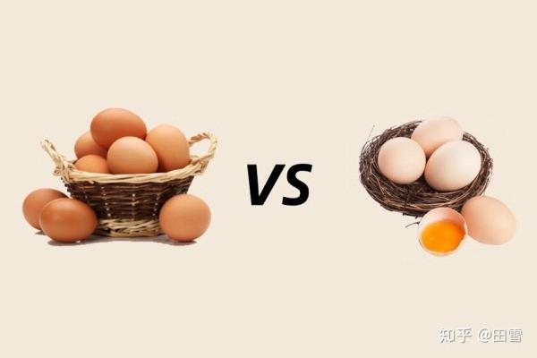 Trứng màu nâu và trứng màu trắng khác nhau thế nào
