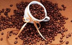 """Định nghĩa về cà phê - Cách phân biệt giữa cà phê """"thật"""" và """"giả"""""""