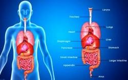 Từ vựng tiếng Anh về bộ phận cơ thể người, tên các bộ phận cơ thể bằng tiếng Anh