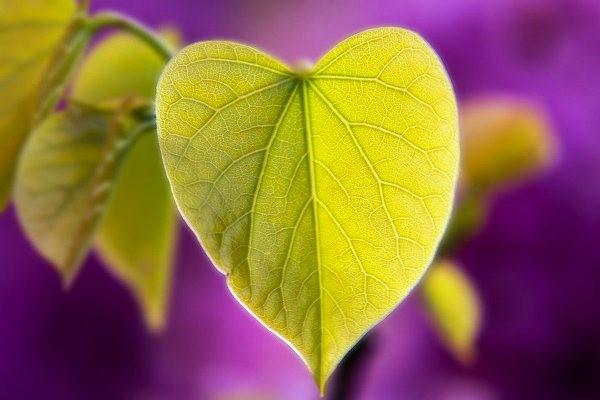 Hoa bỉ ngạn là hoa gì, hoa bỉ ngạn có thật không? Sự tích và ý nghĩa của hoa bỉ ngạn