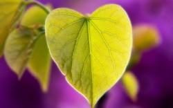 Lời Phật dạy về tình yêu - Hiểu để sống và yêu trọn vẹn một đời