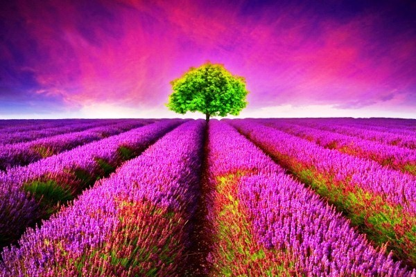 Top những hình nền thiên nhiên full HD đẹp nhất thế giới mê hoặc lòng người