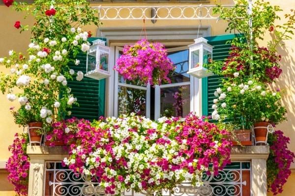Top 10 hạt giống hoa đẹp dễ trồng cho người mới bắt đầu