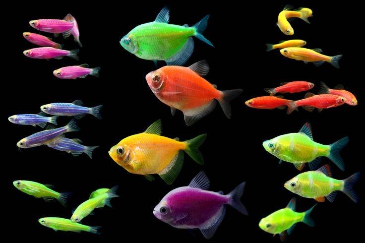 Loài cá không mắt ở Mexico nhìn bằng tuyến tùng trong não bộ