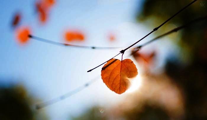6 câu nói của cổ nhân giúp bạn thấy rõ lòng người thật giả
