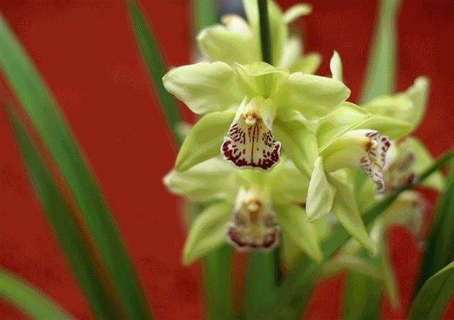 Cùng chiêm ngưỡng 13 loài hoa hiếm và đẹp nhất thế giới