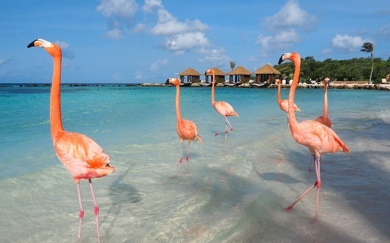 Reviews đất nước Curacao xinh đẹp
