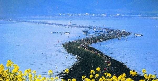 Biển ở giữa hai đảo Jindo và Modo Hàn Quốc tách đôi tạo thành con đường nối liền hai đảo (Ảnh: buzzhunt UK)