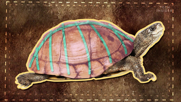 Đây là những gì có bên trong chiếc mai của một con rùa, và đảm bảo chúng sẽ khiến bạn há mồm kinh ngạc