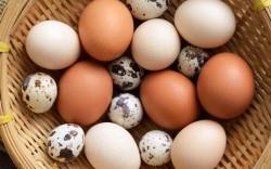 Trứng gà, trứng vịt, trứng cút trứng nào tốt hơn cho trí não bé?