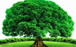 Vì sao thân cây lại có hình trụ mà không phải hình vuông, hình tròn