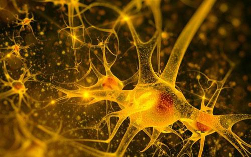 9 bí mật bất ngờ của bộ não mà chúng ta chưa biết